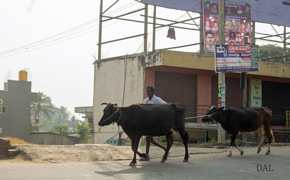 2015_01_India_08_road to Mysore_027