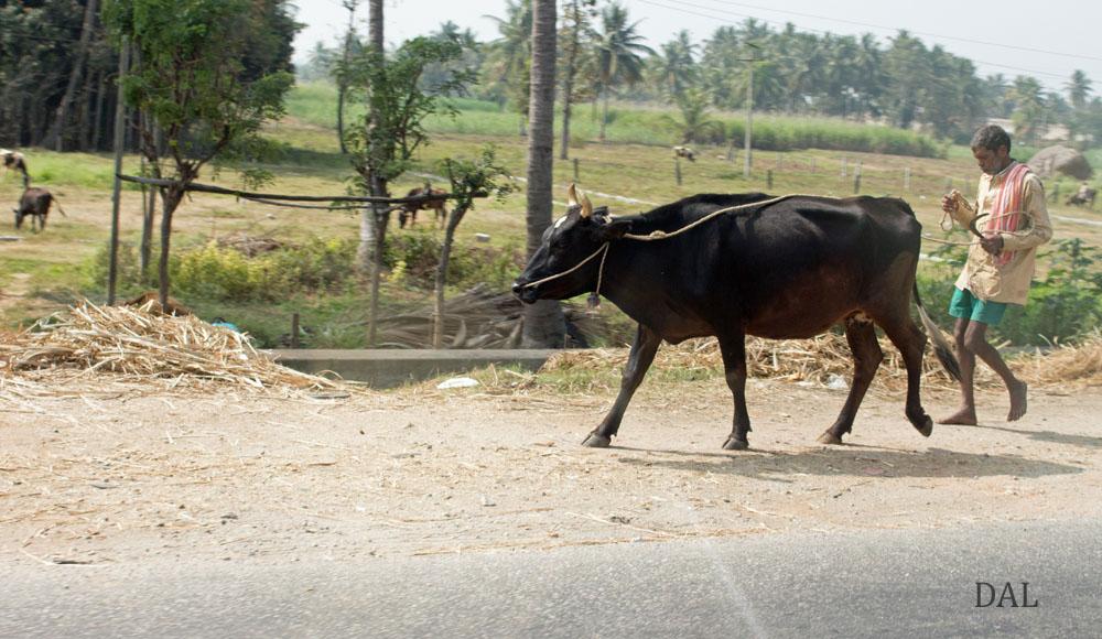 2015_01_India_08_road to Mysore_028