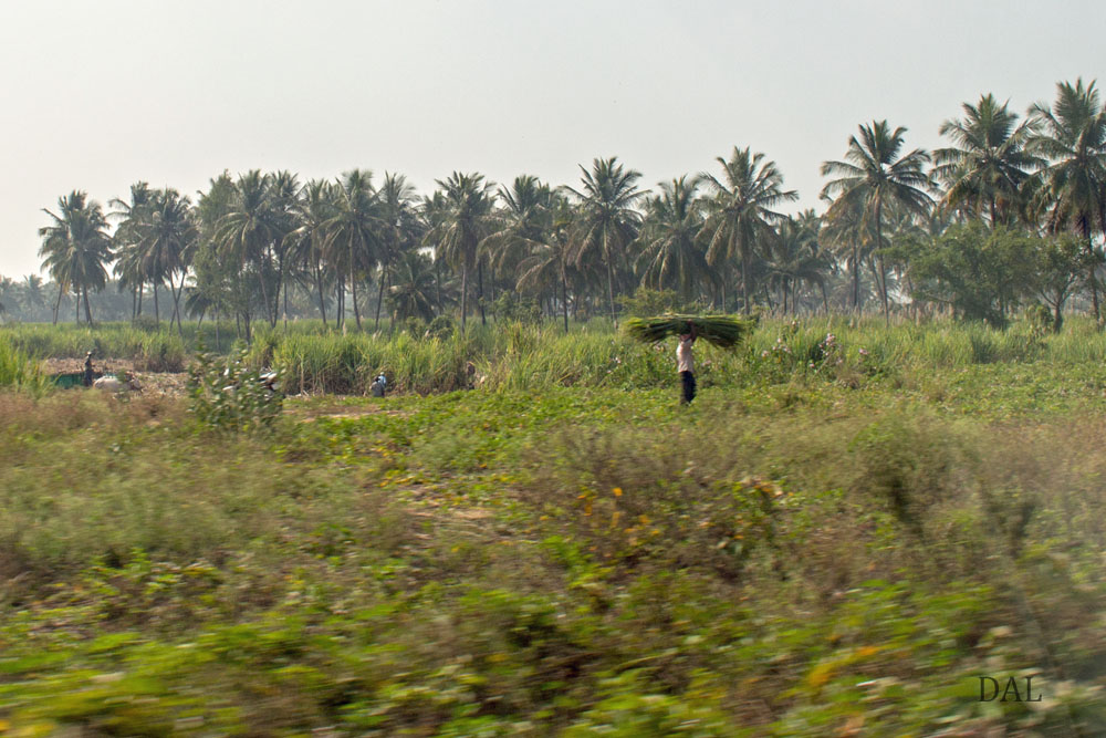 2015_01_India_08_road to Mysore_033