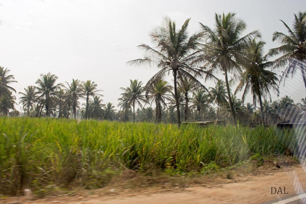 2015_01_India_08_road to Mysore_034