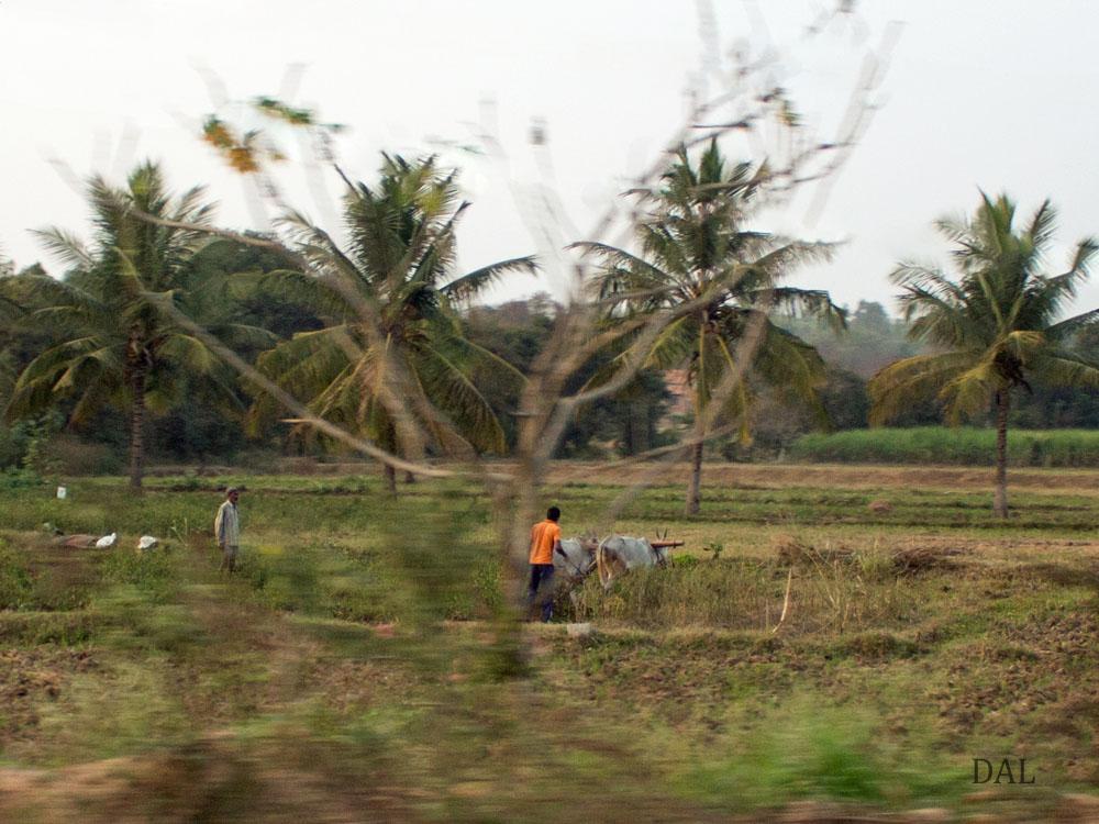 2015_01_India_08_road to Mysore_037