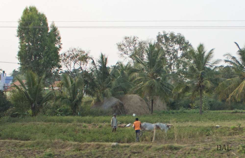 2015_01_India_08_road to Mysore_038