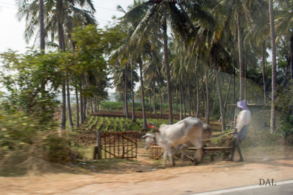2015_01_India_08_road to Mysore_039