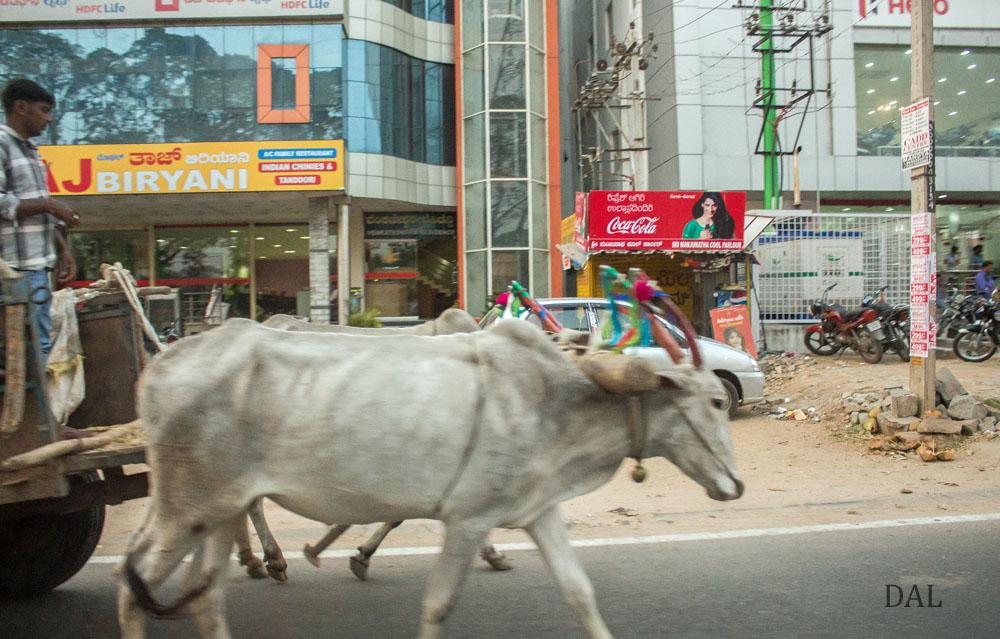 2015_01_India_08_road to Mysore_041