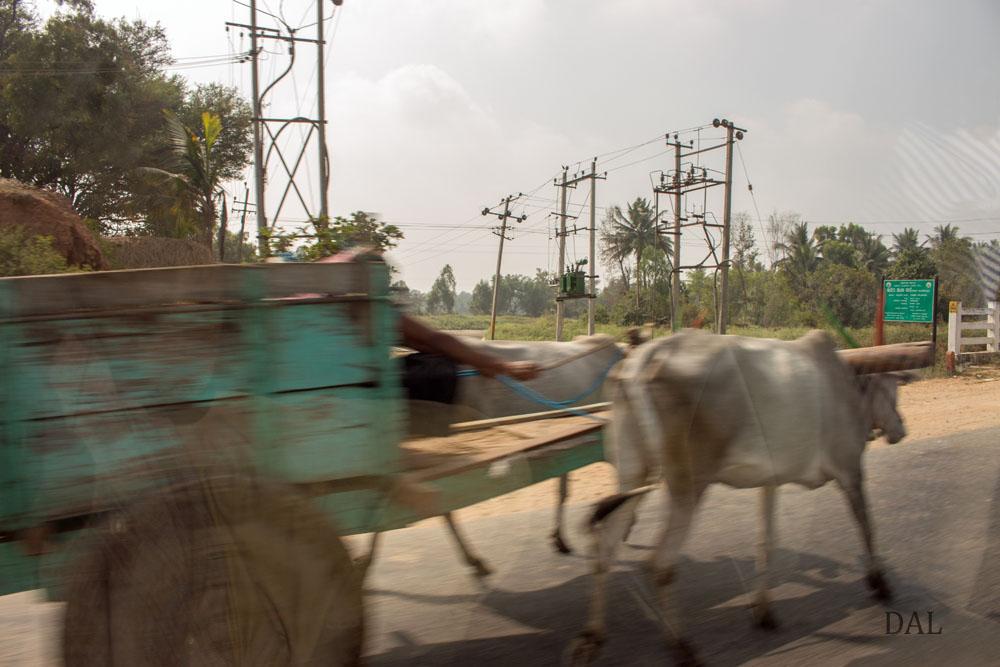 2015_01_India_08_road to Mysore_042