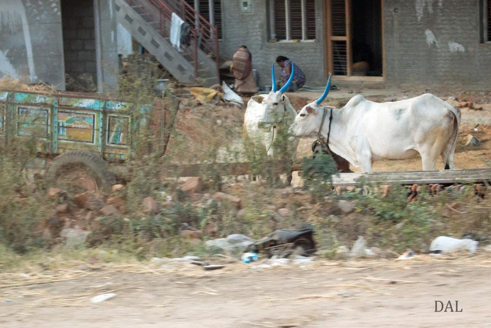 2015_01_India_08_road to Mysore_043