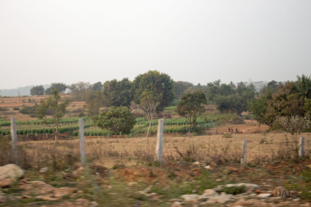 2015_01_India_08_road to Mysore_050