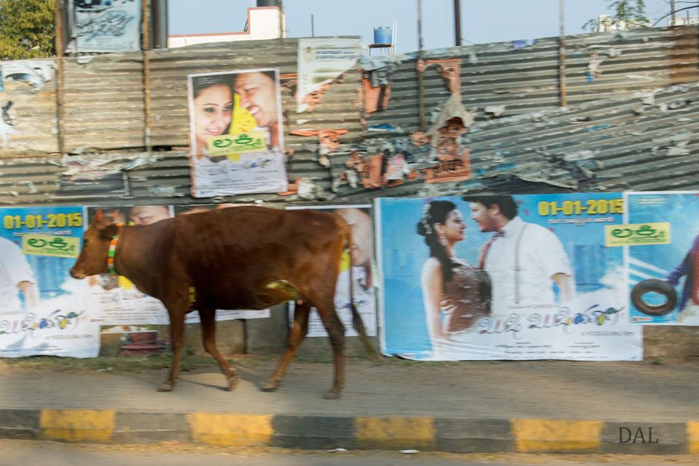 2015_01_India_09_3_city__025