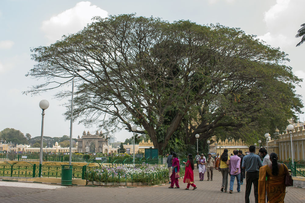 2015_01_India_09_Mysore_palace_068