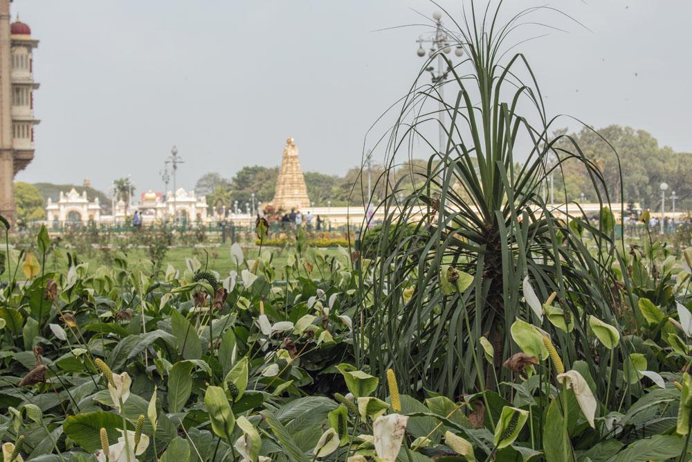 2015_01_India_09_Mysore_palace_069