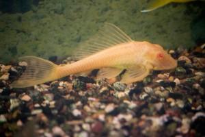 рыбы_001