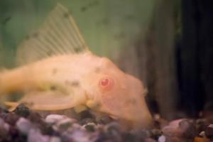 рыбы_003