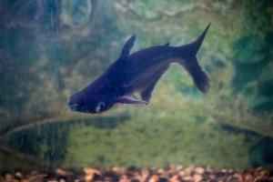 рыбы_009