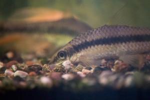 рыбы_010