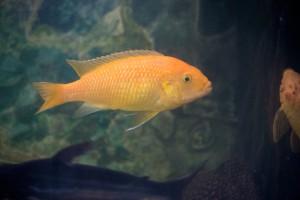 рыбы_012