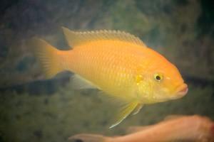 рыбы_013
