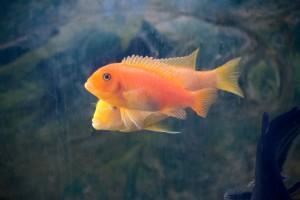 рыбы_014