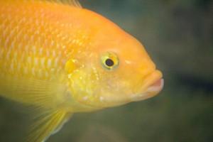 рыбы_015