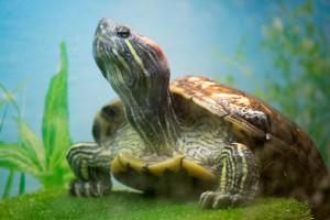 черепахи_001