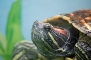 черепахи_010