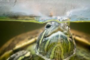 черепахи_027