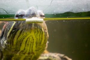 черепахи_028